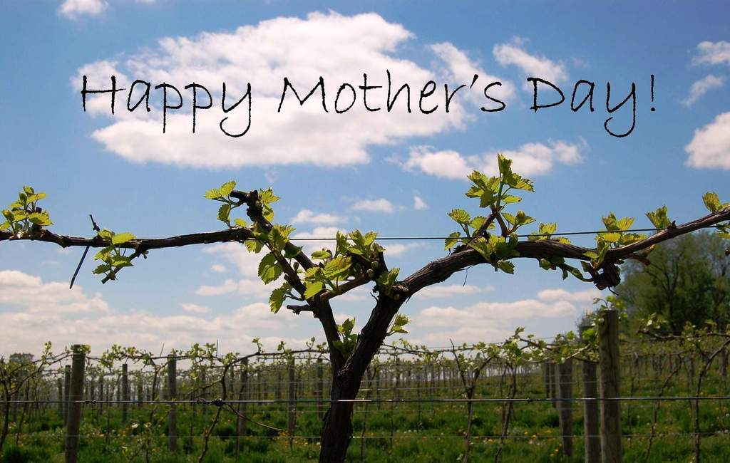 Happy Mother's Day from Victory View Vineyard.