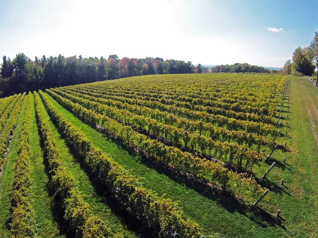 Drone photo of Victory View Vineyard.