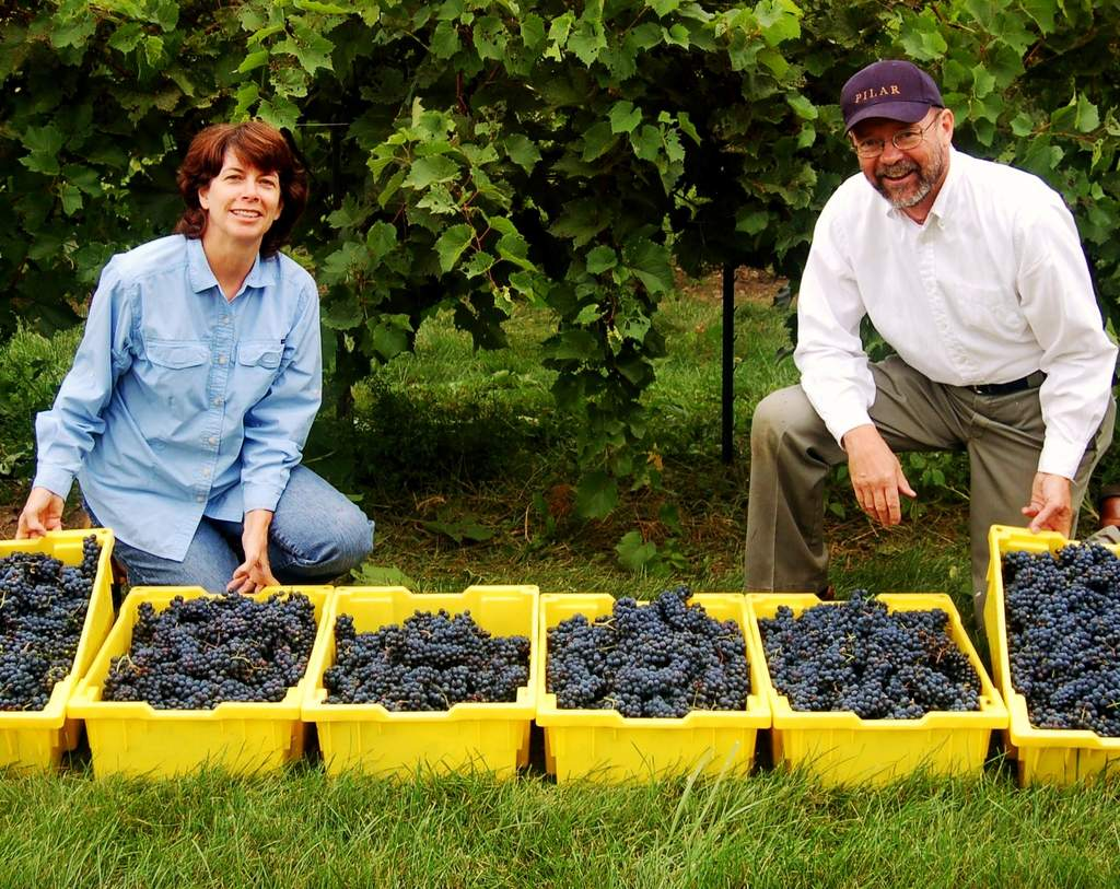 Mary and Gerry display lugs of marechal foch grapes during first harvest in 2007.